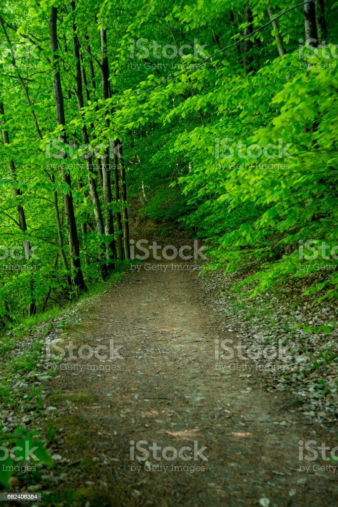 Footpath Between Trees In Forest royalty-free stock photo