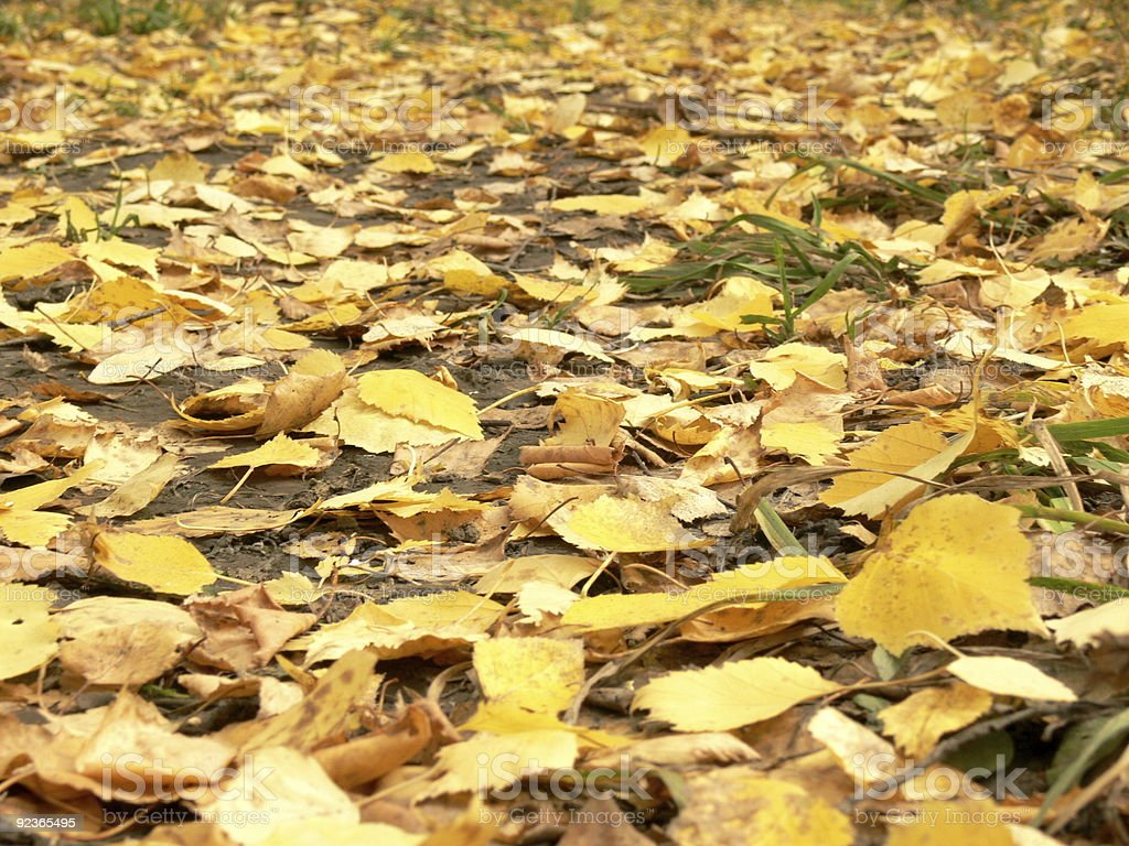 Footpath filled up by yellow leaves royalty-free stock photo