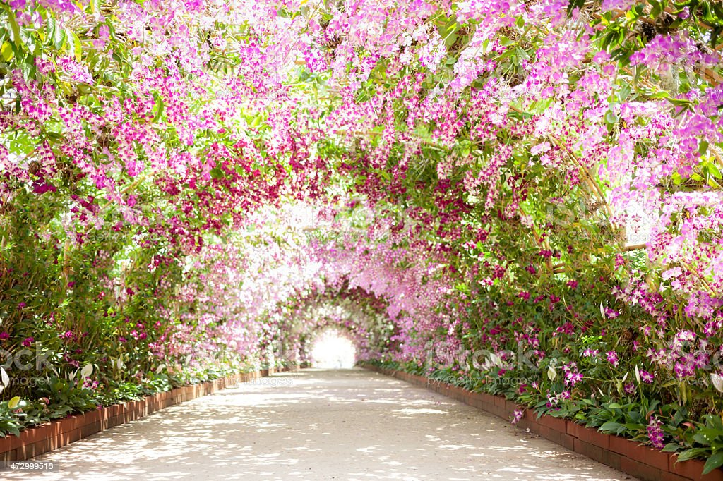 footpath in a botanical garden with orchids lining the path stock photo