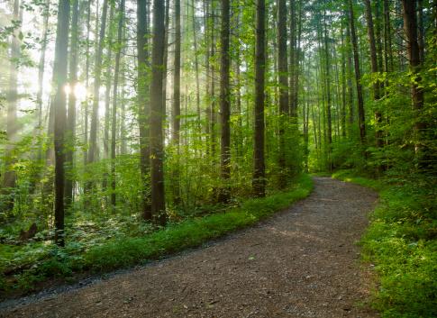 Sunlight filtering through a misty forest.