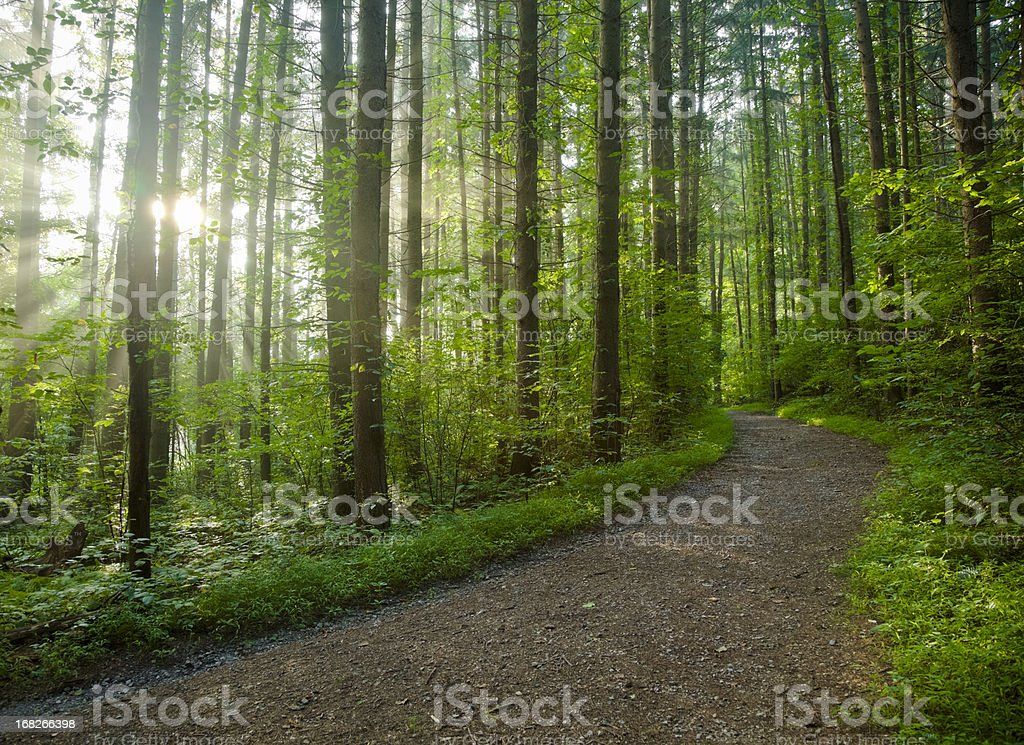 Footpath in a dense forest on a sunny day stock photo