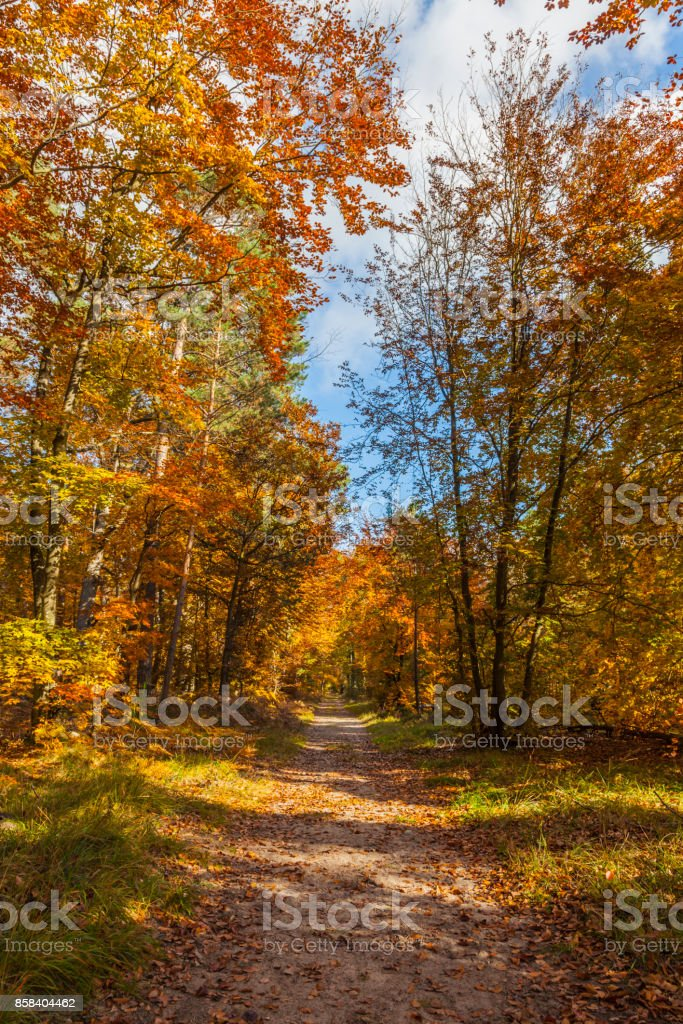Footpath in a Forest stock photo