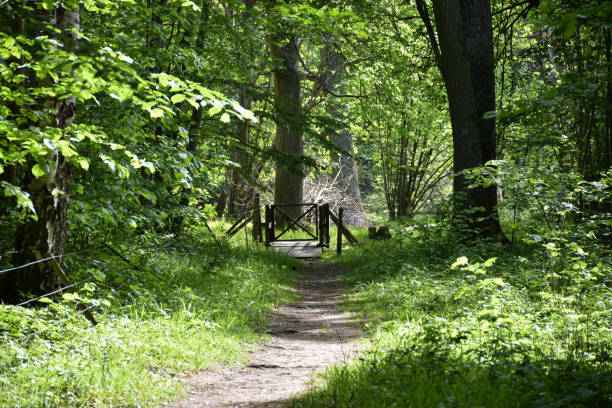 Footpath in a lush green forest by springtime stock photo