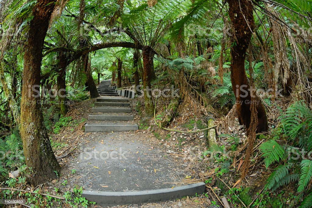 Footpath in a Rainforest royalty-free stock photo