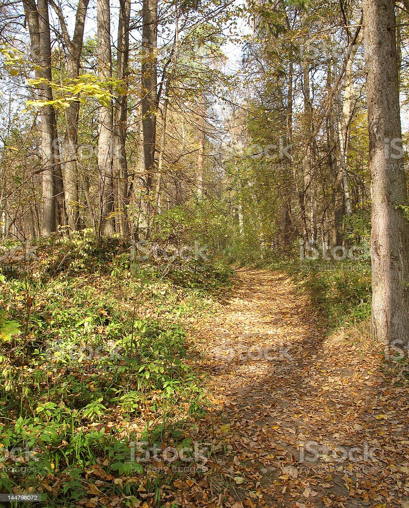 Footpath in autumn forest royalty-free stock photo