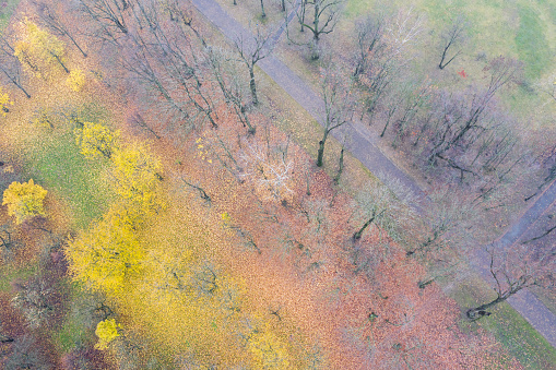 footpath in autumn park. ground covered by colorful fallen leaves. aerial view