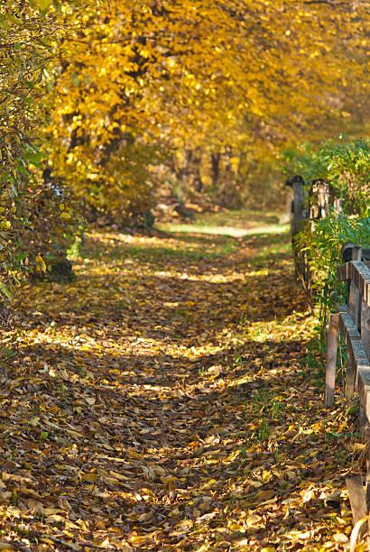 Gehweg im Herbst – Foto