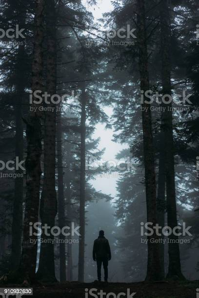 Photo of Footpath in dark and misty autumn forest