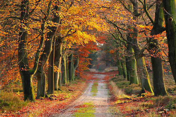 footpath in fall stock photo