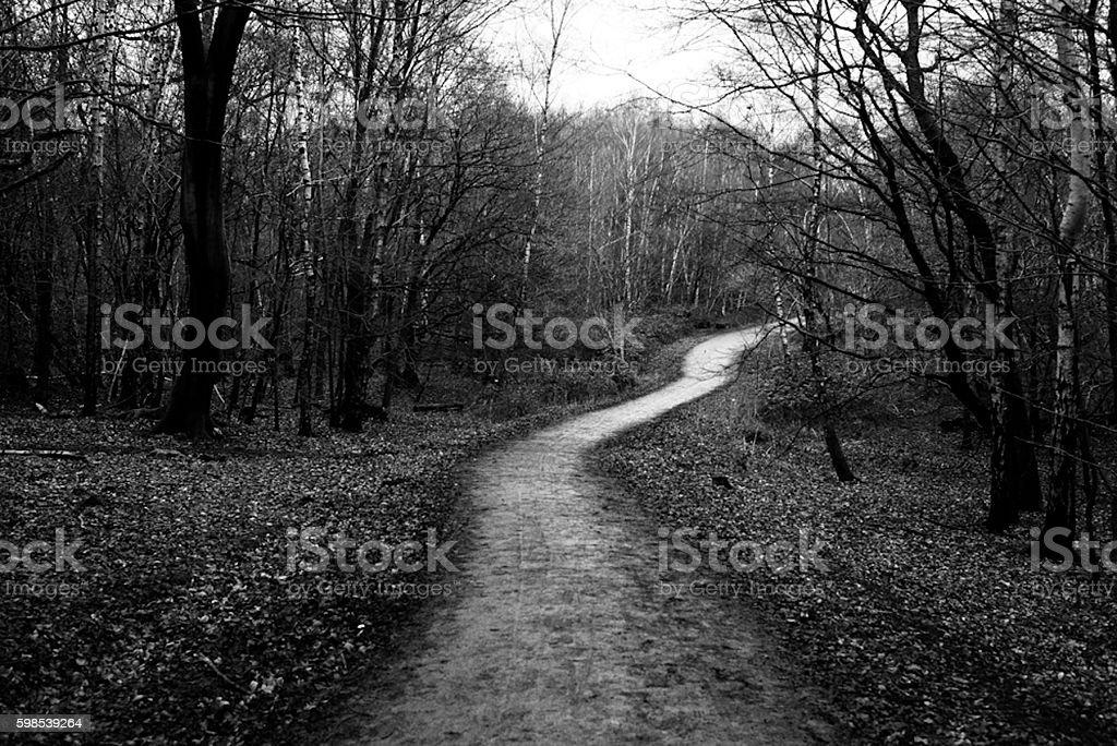 Sentier pédestre dans la forêt photo libre de droits