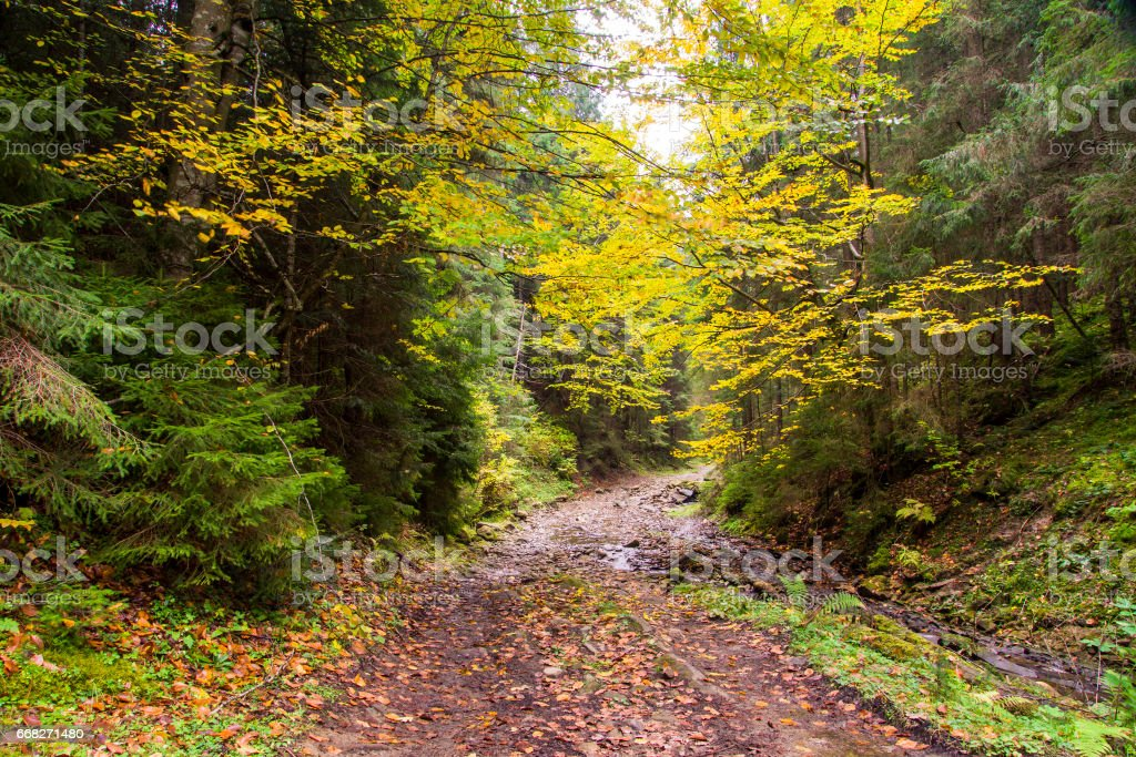 footpath in forest foto stock royalty-free