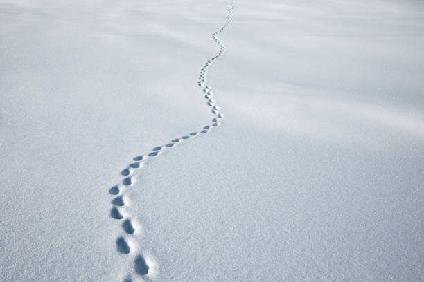 footpath in fresh snow - borchee stock pictures, royalty-free photos & images