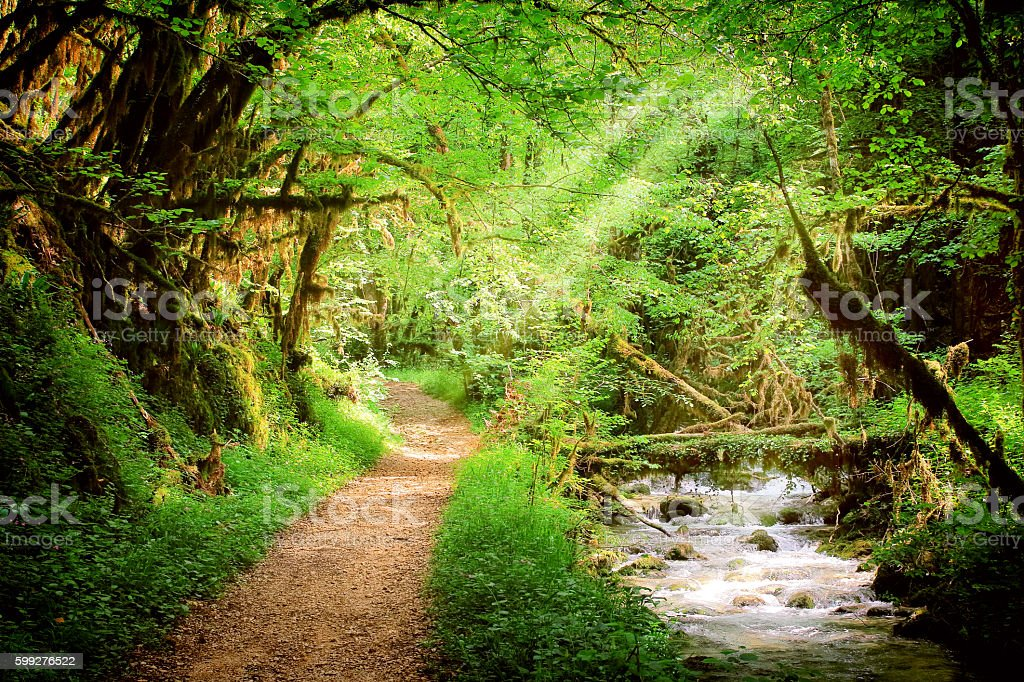 Footpath in lush foliage forest with wild fresh water stream stock photo