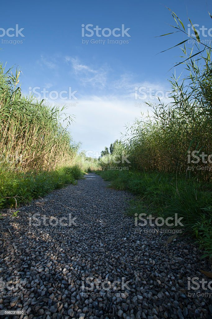 Footpath in Olympic Forest Park, Beijing, China foto royalty-free