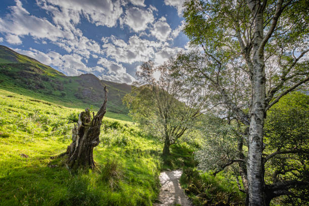 Footpath in scenic valley in Lake District stock photo