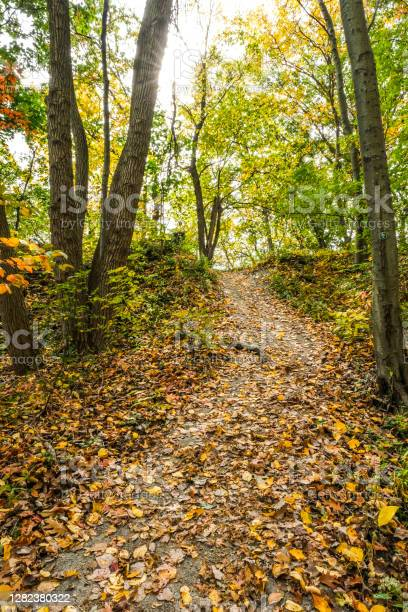 Photo of A footpath in the fall