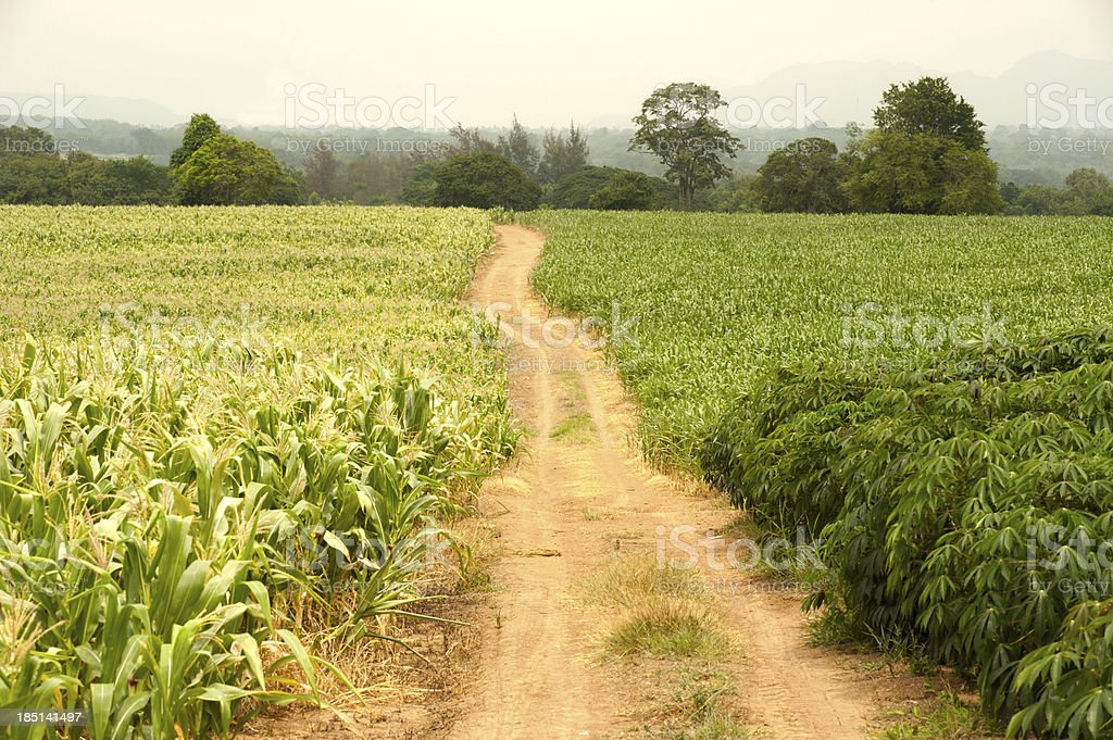 Footpath in the field. royalty-free stock photo