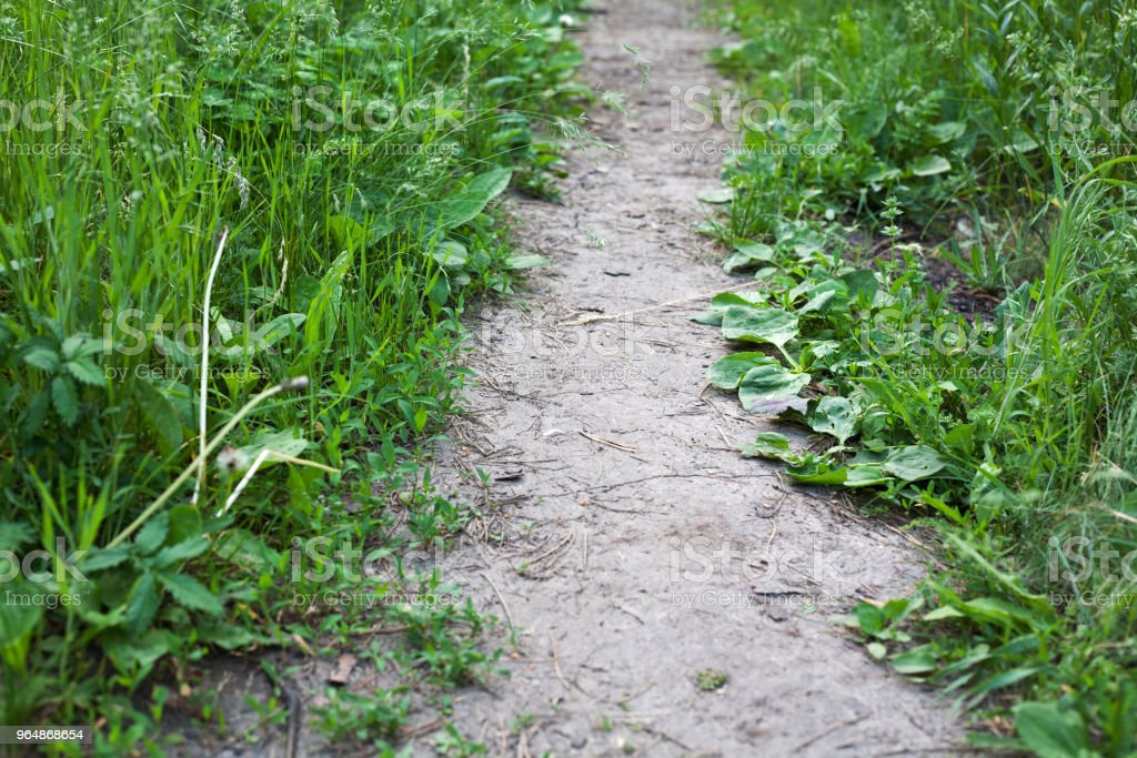 Footpath in the forest among the grass. Summer hiking route. royalty-free stock photo