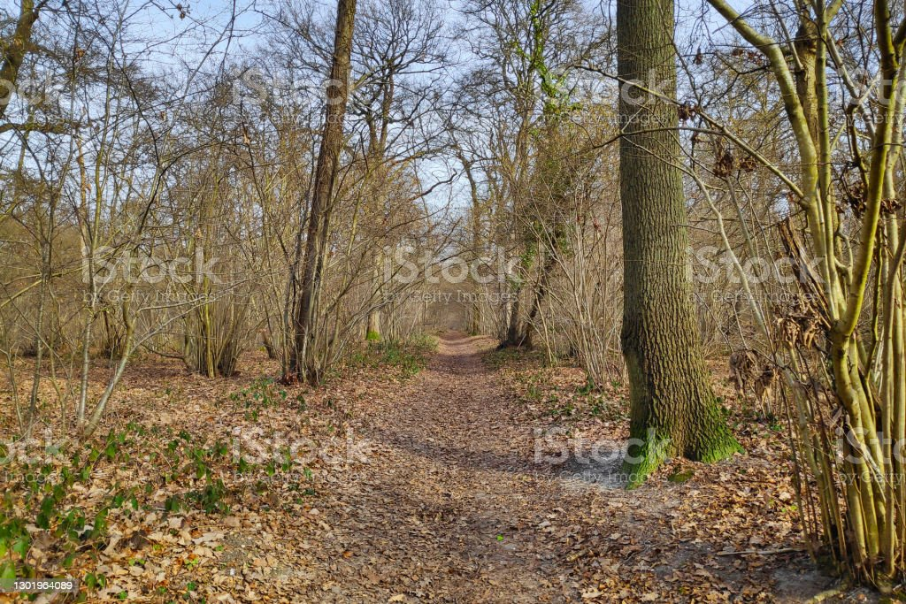 Footpath in the forest Footpath running through the woods. Beauty In Nature Stock Photo