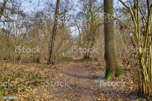 Footpath In The Forest Stock Photo - Download Image Now