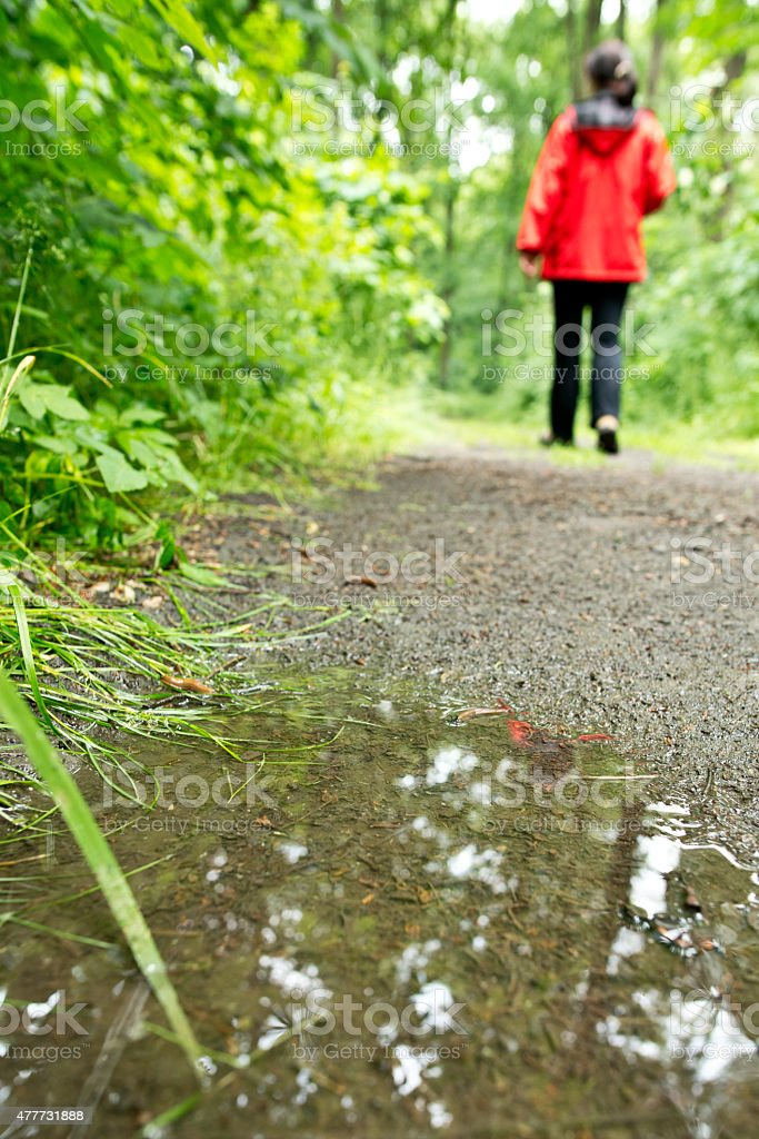 footpath in the forest with a puddle stock photo