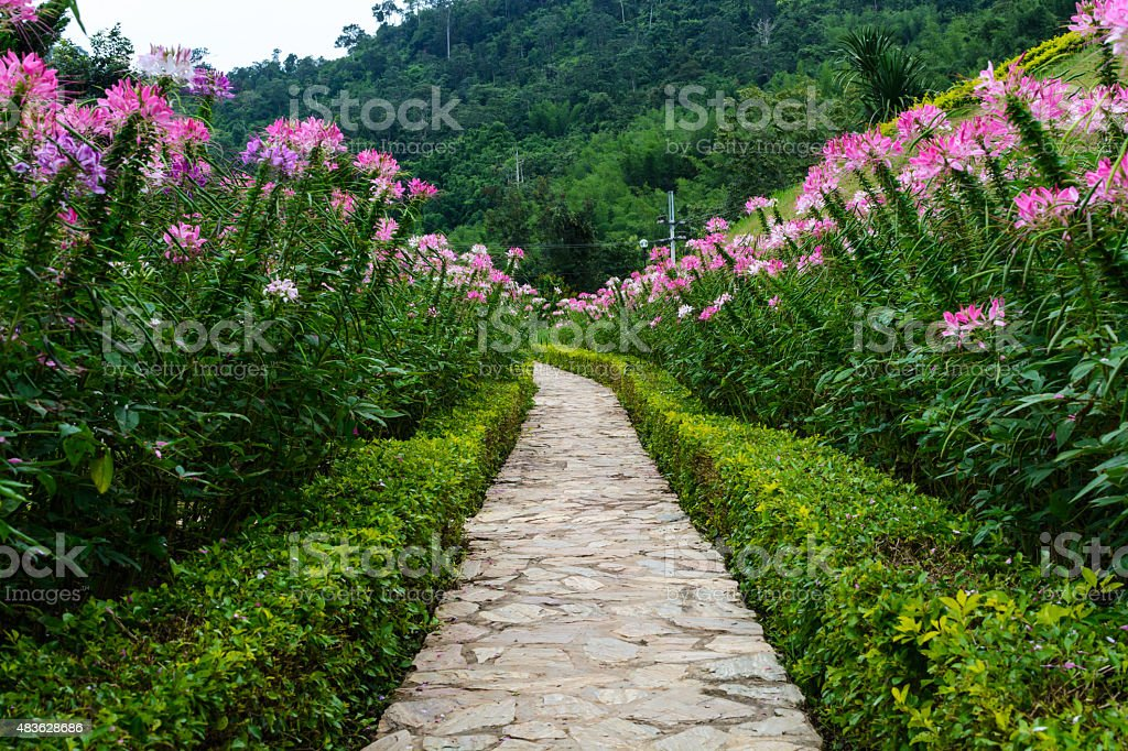 Footpath in the garden with beautiful flower stock photo