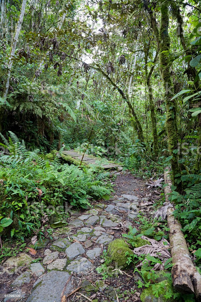 Footpath in the jungle royalty-free stock photo