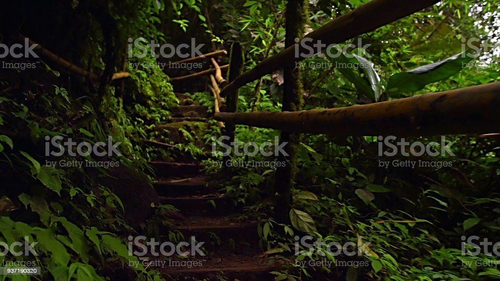 footpath in the rainforest royalty-free stock photo