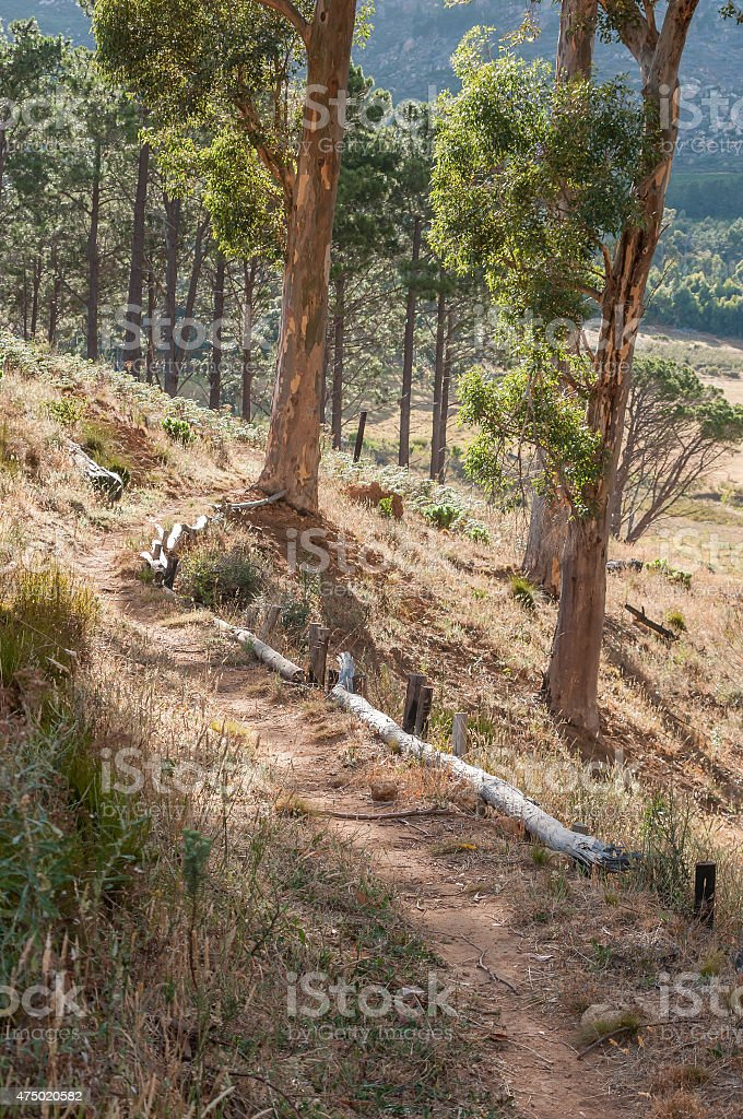 Footpath in the wildlife reserve on Wedderville Estate stock photo