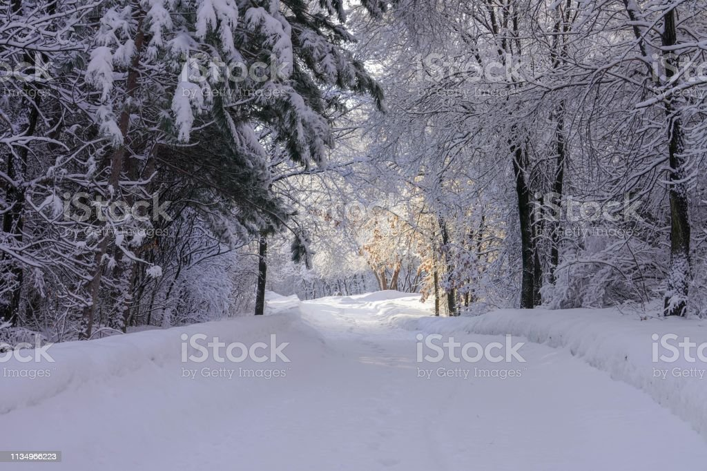 Footpath in the Woods after Beautiful Frosty Snowfall stock photo