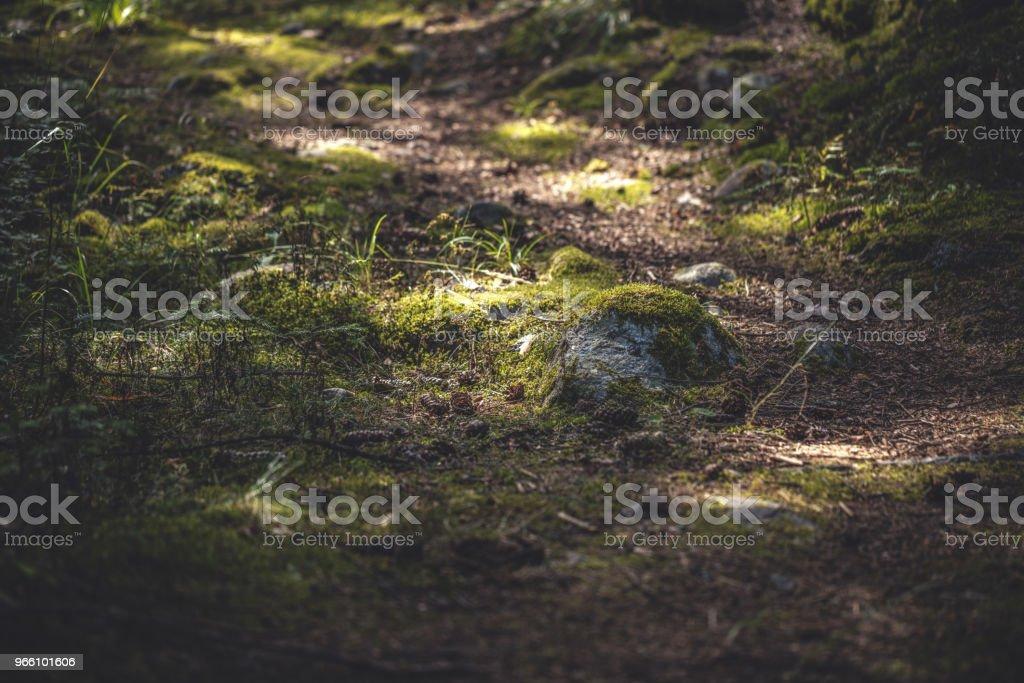 Vandringsled i skogen - Royaltyfri Berg Bildbanksbilder