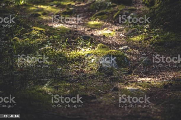 Vandringsled I Skogen-foton och fler bilder på Berg