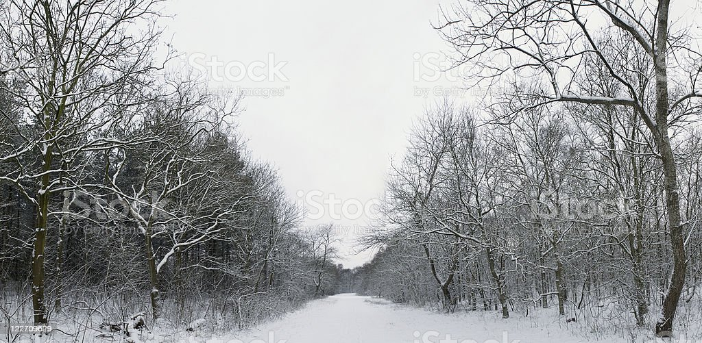 footpath in winter stock photo