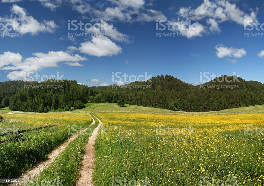 footpath into mountain meadow with millions of flowers royalty-free stock photo