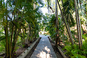 Footpath is paved with stone tiles in the Park. Paving slabs on the footpath between tropical plants. Palm grove. Asia
