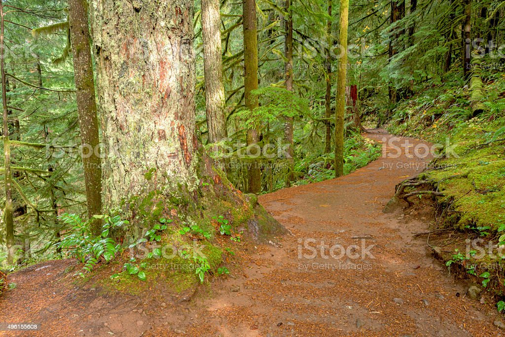 Footpath leads through a rain forest stock photo