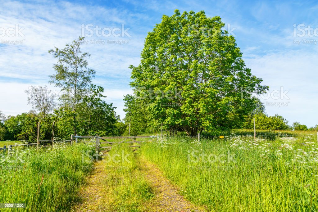 Footpath on a summer meadow with a gate royalty-free stock photo