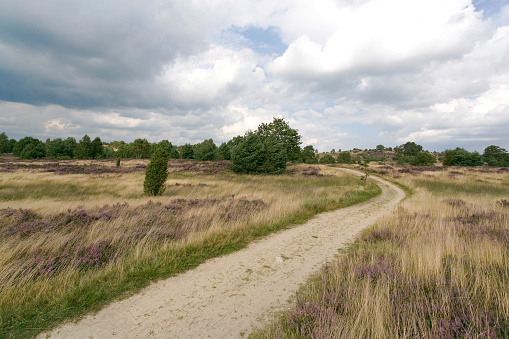 Footpath on Heathland in Lower Saxony / Germany (XXL)