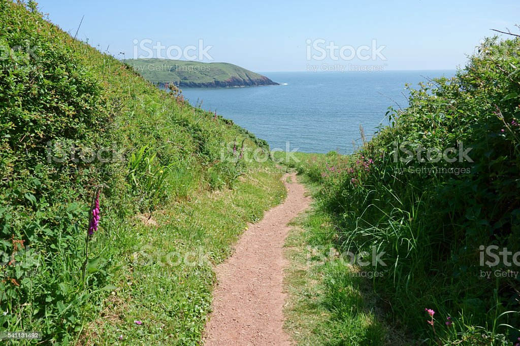 Footpath on Pembrokeshire coastal path. stock photo