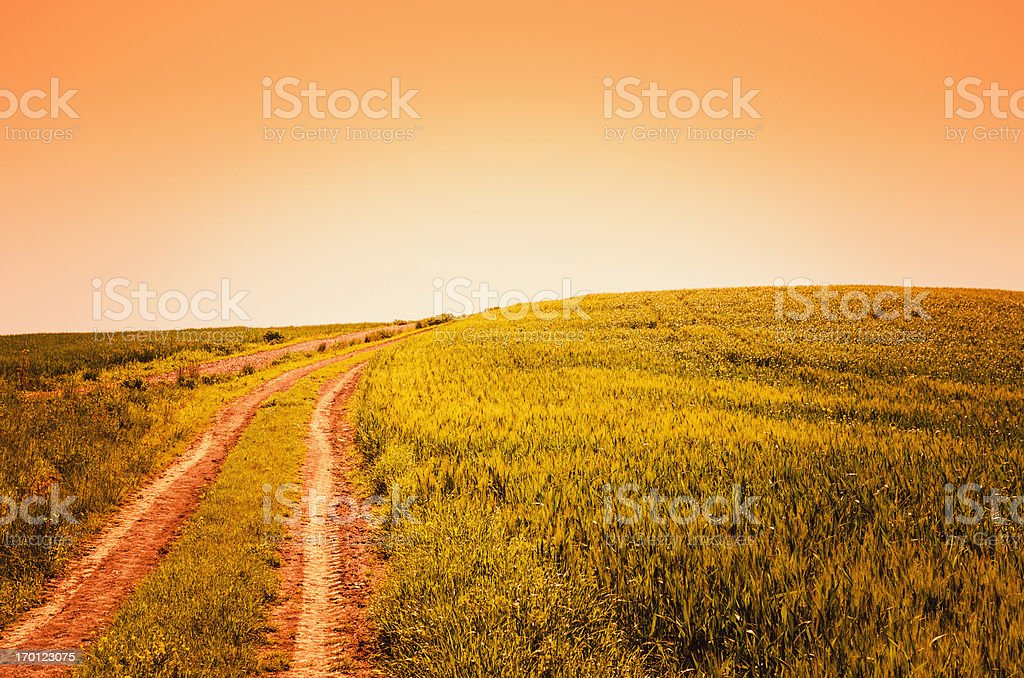 Footpath on the tuscany countryside royalty-free stock photo