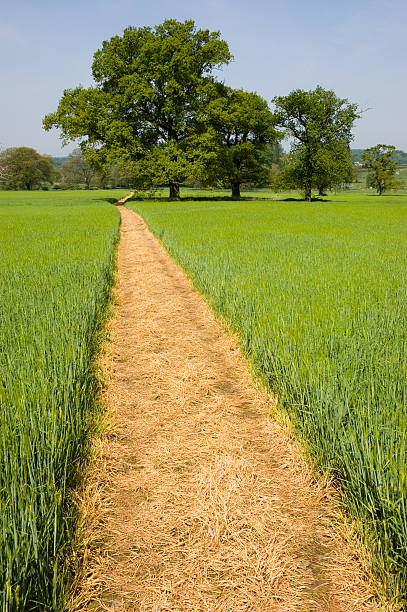 Footpath over a Grass Field stock photo