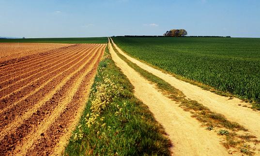 footpath rural fens canbridgeshire countryside uk farmland - shot on film