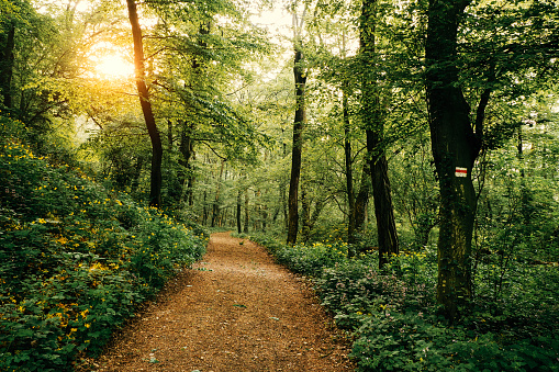 A footpath through a forest with sunshine