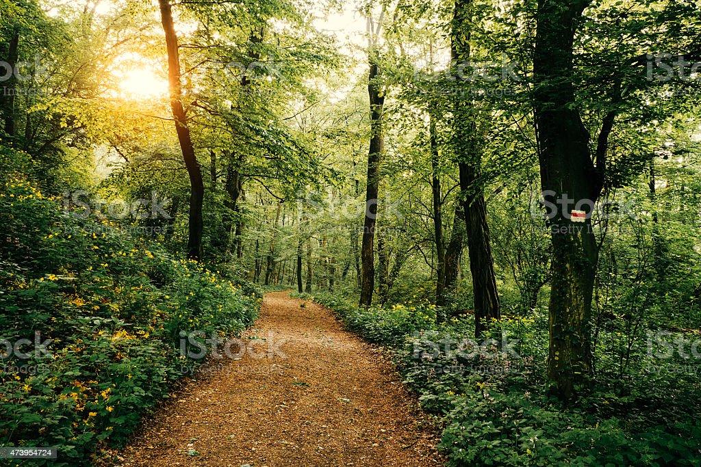 Weg im Wald – Foto
