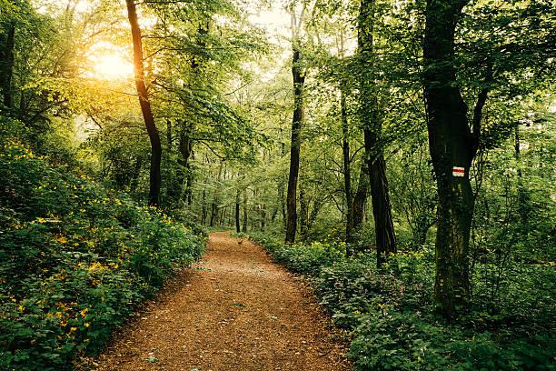 trilho na floresta - trilho imagens e fotografias de stock