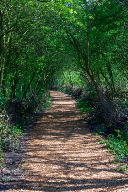 林肯郡巴頓附近的遠英的濕地樹木隧道的行人路 - 林肯郡 個照片及圖片檔