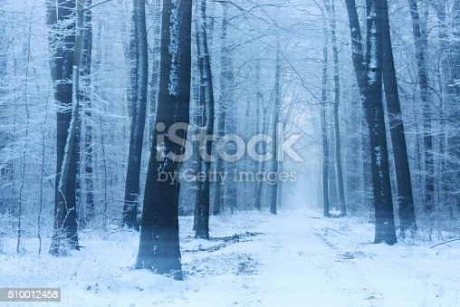 Footpath through Deciduous Forest of bare Beech and Oak Trees covered by Snow and Ice during heavy snowstorm, long exposure