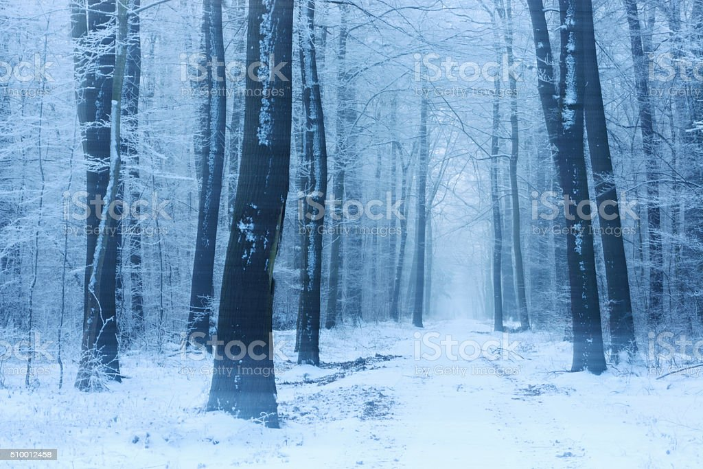 Footpath through Forest covered by Snow during Blizzard stock photo