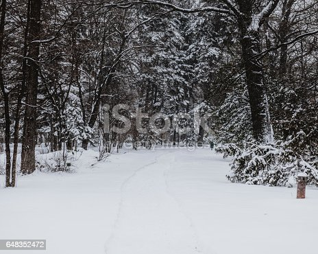 A footpath through Forest (park) covered by snow during snowfall.