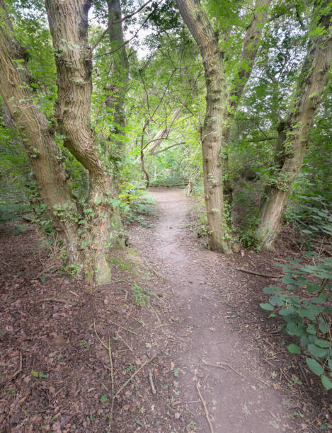 Fußweg (Weg) durch Wald – Foto